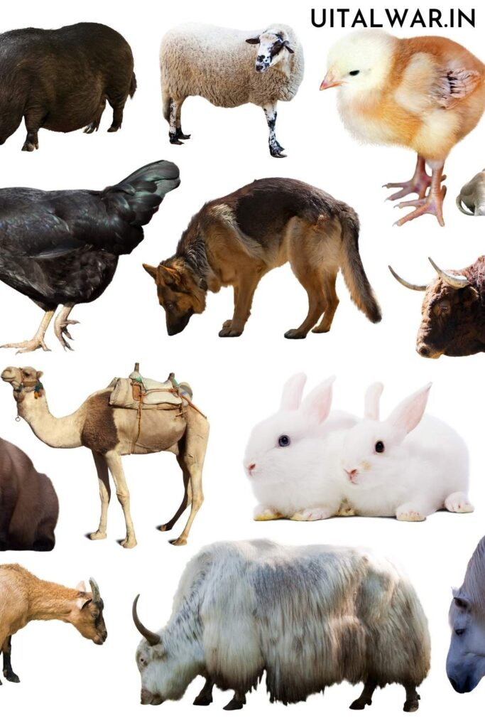 Domestic Animals Essay for Students